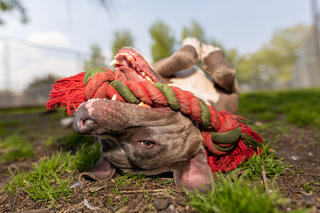 Photographer Captures Shelter Animals in Incredible Images