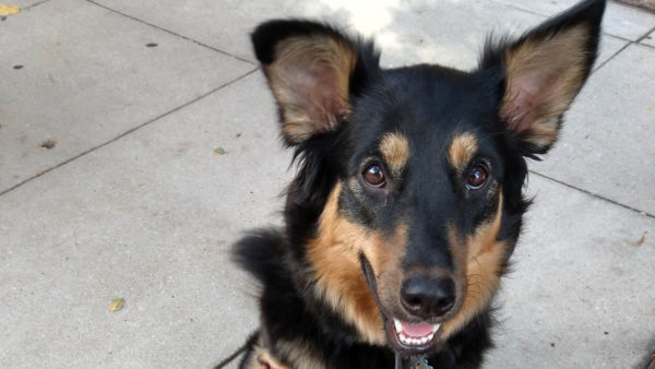 Man Offers Reward After Dog Was Stolen From Outside River North Restaurant