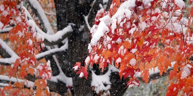 The first measurable snow of the season graces colorful leaves on a tree at peak color, Tuesday, Oct. 20, 2020, in Minneapolis.