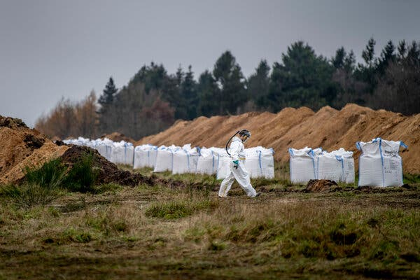 A mass grave being prepared for mink in a military area near Holstebro, Denmark, on Monday.